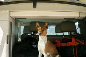 Camping mit Bello: Die schönsten Campingplätze Europas für Hunde