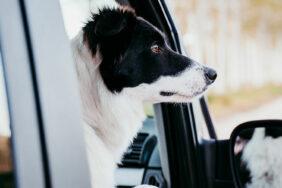 Die besten Camping-Fahrzeuge für Hundebesitzer