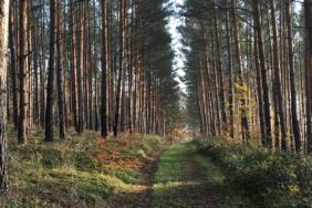 Camping in der Dübener Heide: Die besten Geheimtipps