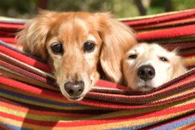 Fiffi, Bello und Buddy: Die schönsten Campingplätze für Urlaub mit mehreren Hunden