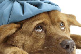 Mysteriöses Hundesterben in Norwegen. Warnung an alle Camper!
