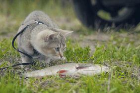 Camping mit Katze: Die wichtigsten Tipps