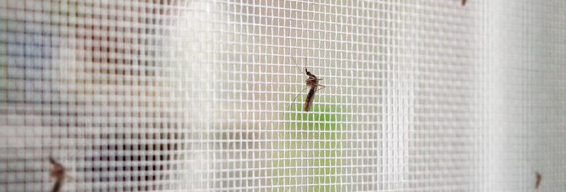 Mosquito an Schutzwand