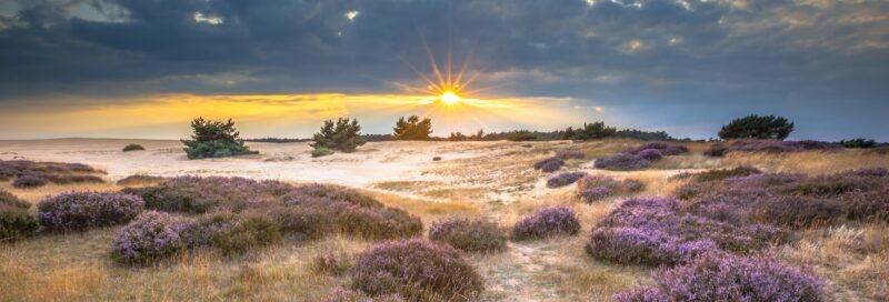 Sonnenaufganggang im Nationalpark Hoge Veluwe