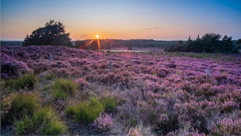 Sonnenuntergang im Nationalpark De Sallandse Heuvelrug