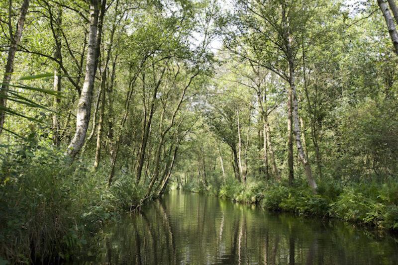 Ein Fluss im Nationalpark Weeribben Wieden.