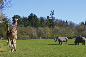 Verschiedene Wildtiere im Knuthenborg Park & Safari
