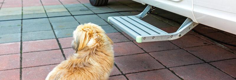 Hund sitzt vor elektrischem Einstiegstritt