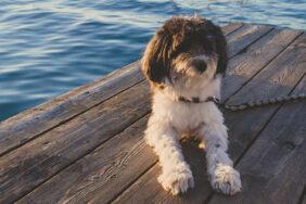 Italien mit Hund: 9 direkt buchbare Campingplätze