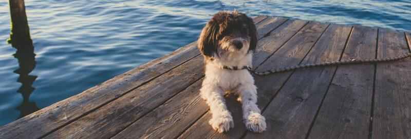 Hund auf Steg bei Venedig