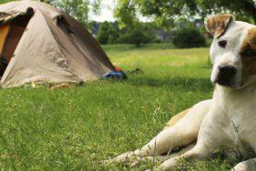 Camping mit Hund in Dänemark: Das musst du beachten