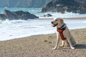 Camping mit Hund in Frankreich – Zwischen Hundeliebe und Verboten