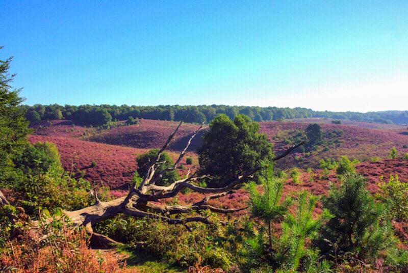 Blick auf die Natur im Nationalpark Veluwezoom