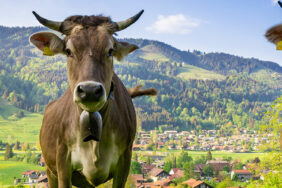 7 schöne Campingplätze im Allgäu