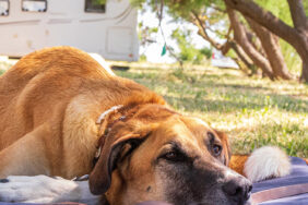 Die 8 besten Campingplätze in Deutschland mit Hund