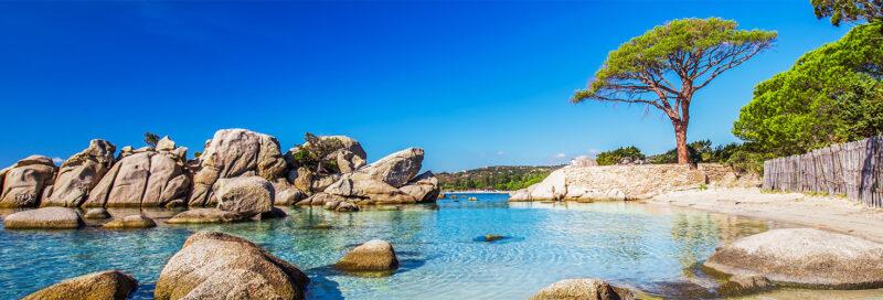 Kiefer am Strand von Palombaggia, Korsika, Frankreich