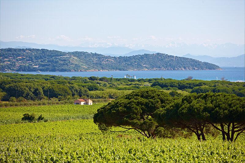 Blick auf das Weingut vom Campingplatz