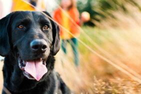 Camping mit Hund: Stressfrei in den Campingurlaub mit Frankana
